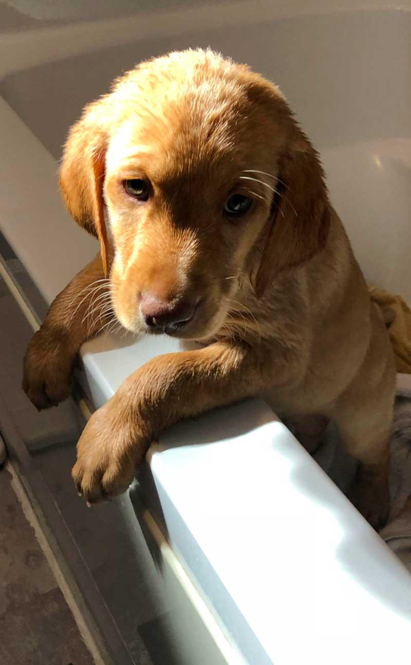 Rose Loves Her Bath
