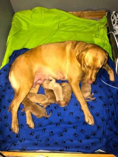 Clara's First Pups